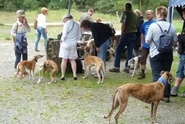 Windhunde Treffen Sommer 2013